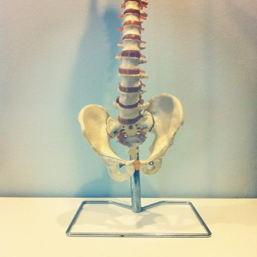Vertebrae and joints